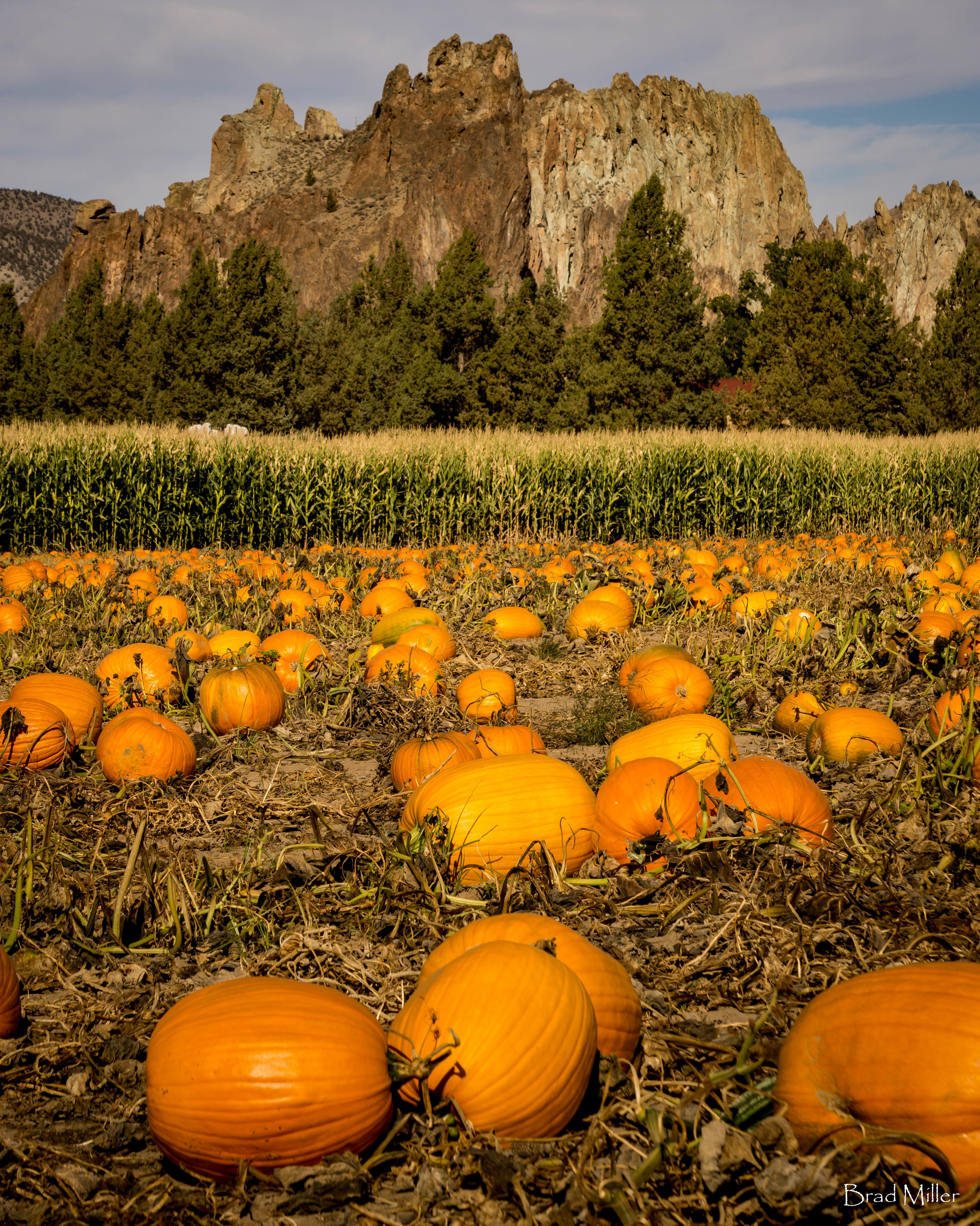 October Is Pumpkin Patch Time In Central Oregon