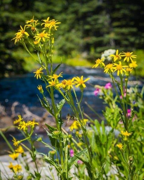 Green Lakes Wildflowers