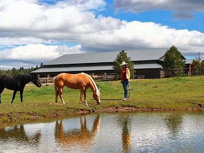Horse Properties for Sale