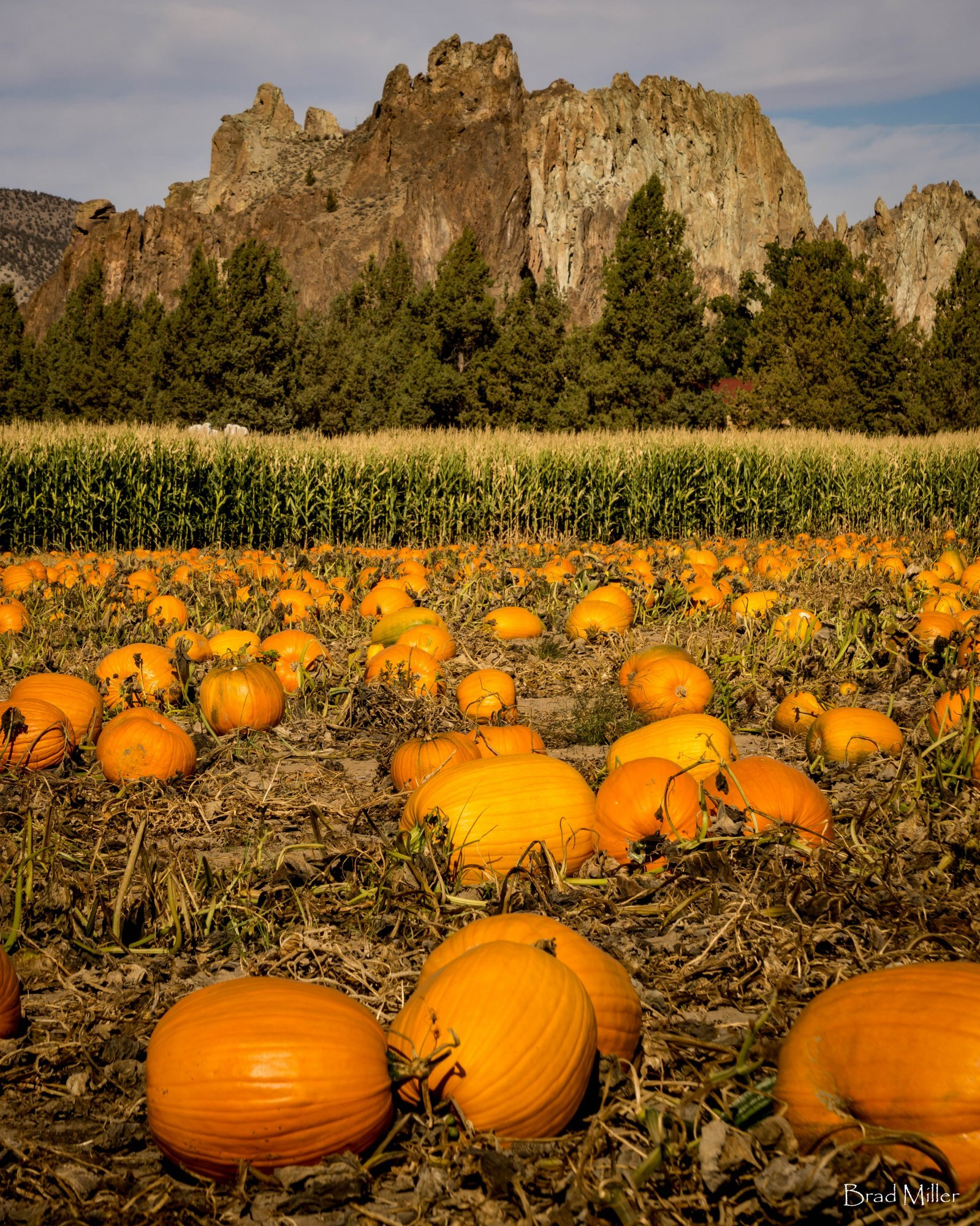 Central Oregon Pumpkin Patch